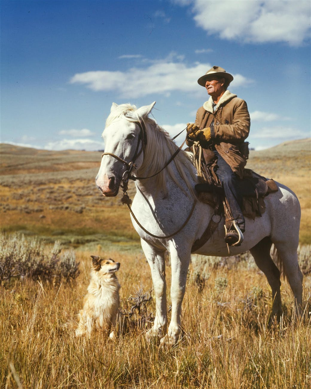 man on white horse next to dog on grassy field